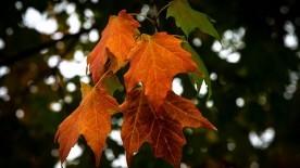 Autumnal Equinox the Celebration of Mabon